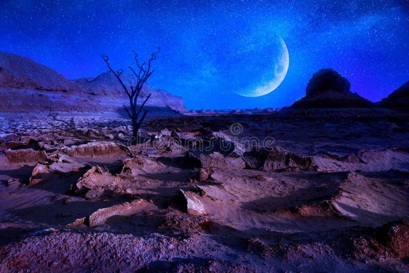 Ensamt dty träd i öknen Mån- landskap i den Dasht-e Lut öknen Det varmmaste stället på jord iran persia Ändra klimatet arkivbild