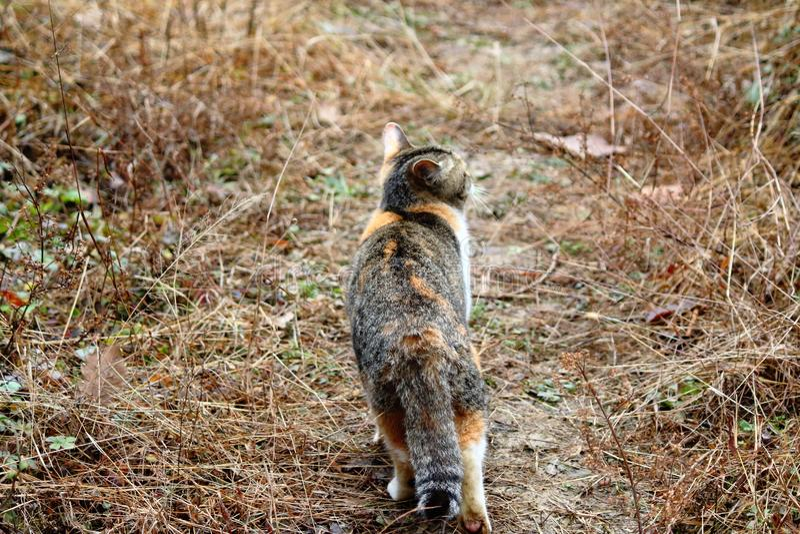 Ensamt gå för katt royaltyfri foto
