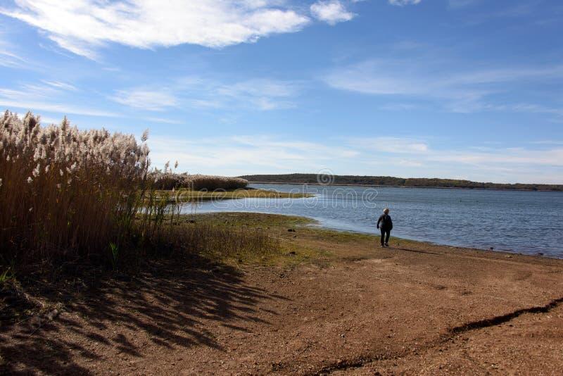 Ensamt gå vid sjön fotografering för bildbyråer
