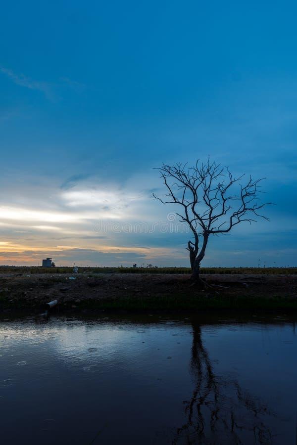 Ensamt konturträd under blå timme på flodstranden royaltyfri bild