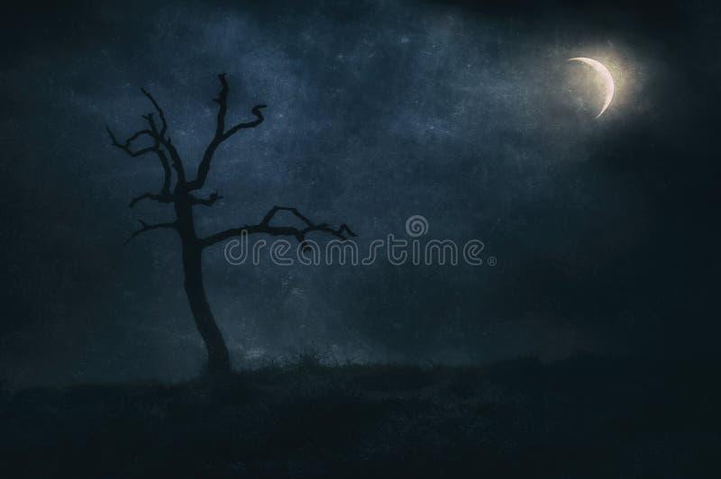 Ensamt och torrt träd på natten under månsken arkivbild