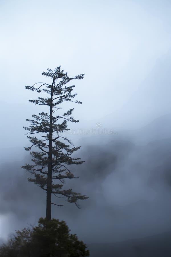 Ensamt sörja trädet i dimman - trädställningar på den lilla kullen med virvlar av grå dimma och knappt synliga berg i avstånd arkivfoto