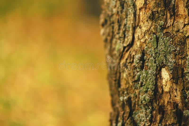 Ensamt sörja trädskorpan i skog arkivbilder