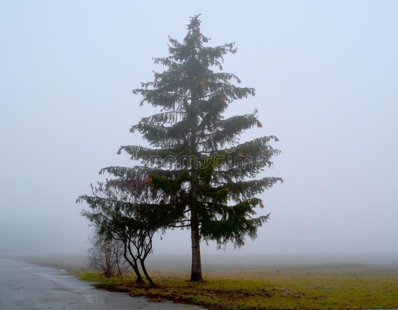 ensamt s?rja treen fotografering för bildbyråer