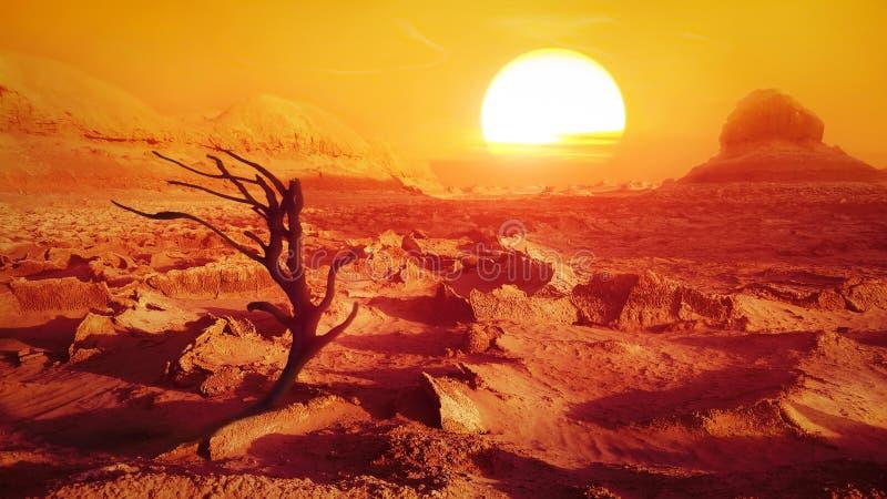 Ensamt torrt träd i öknen mot solen iran persia arkivbild