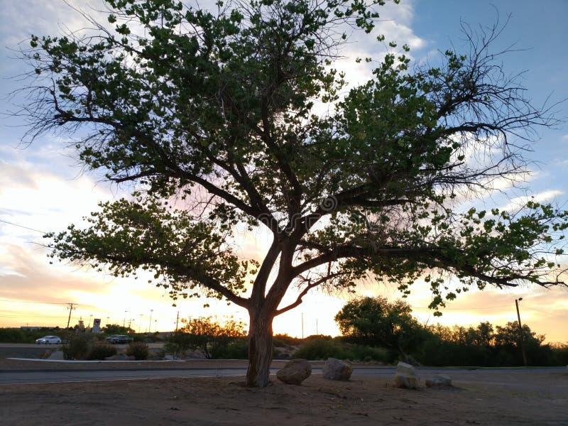 Ensamt träd över himlen royaltyfri bild