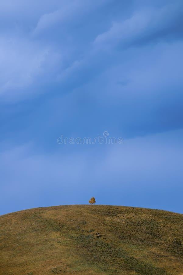 Ensamt träd överst av ett berg arkivfoto