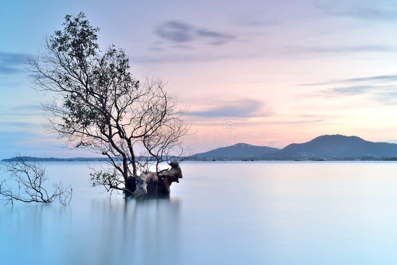 Ensamt träd royaltyfri foto