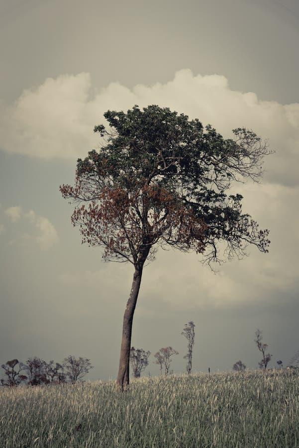 Ensamt träd royaltyfria bilder