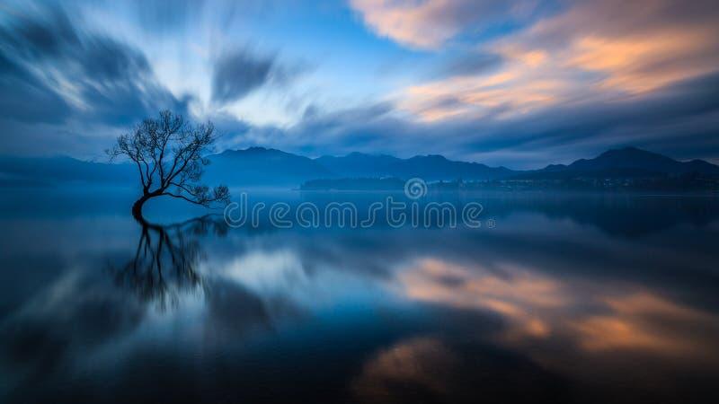 Ensamt träd av Wanaka royaltyfri bild