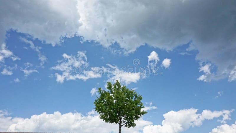 Ensamt träd bland moln royaltyfri bild
