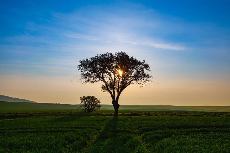 Ensamt träd i central bohemisk Skotska högländerna, Tjeckien royaltyfria foton