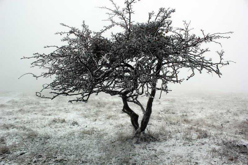 Ensamt träd i dimman i vinter arkivbilder