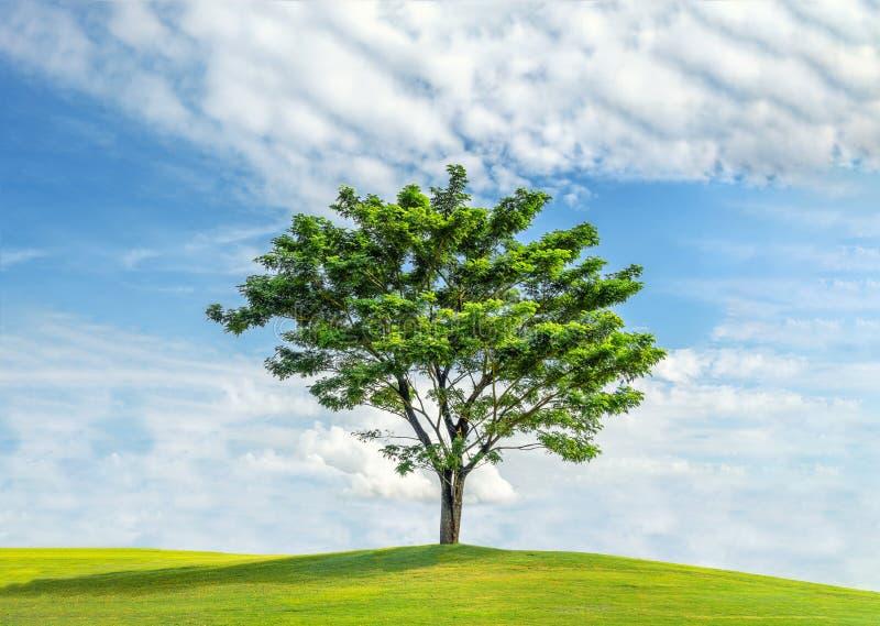Ensamt träd i fält för grönt gräs och blå himmel arkivfoto