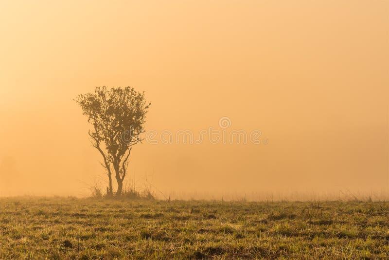 Ensamt träd i frostig morgonmist för tidig vår på soluppgång arkivbild