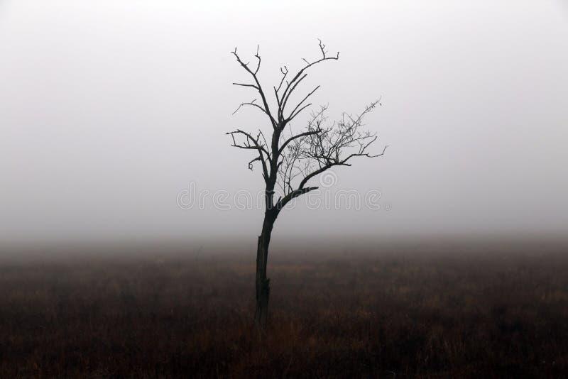 Ensamt träd i höstdag i Krim arkivfoton