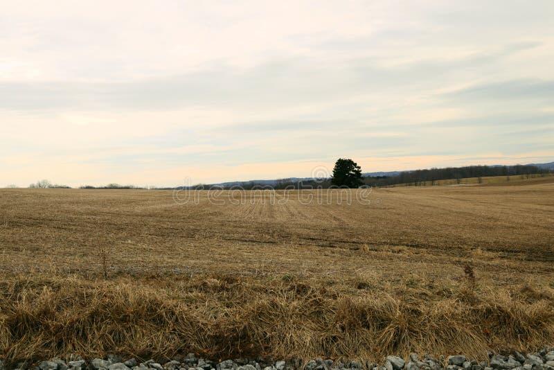 Ensamt träd i jordbruket arkivbild