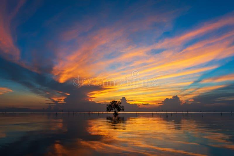 Ensamt träd i lagun fotografering för bildbyråer