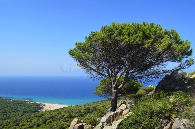 Ensamt träd i motsats med blå himmel arkivbild