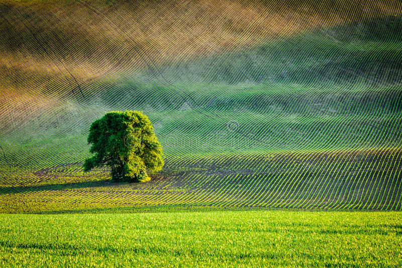 Ensamt träd i plöjt fält fotografering för bildbyråer