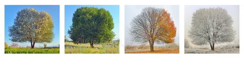 Ensamt träd i säsong fyra royaltyfria foton