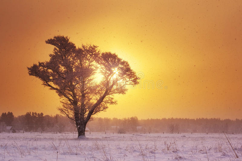 Ensamt träd i snöfall i otta royaltyfri foto