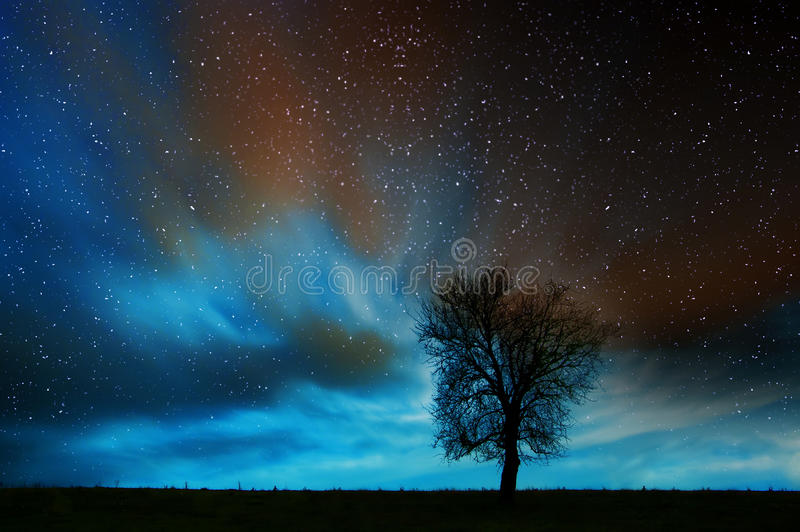 Ensamt träd i stjärnklar natt fotografering för bildbyråer
