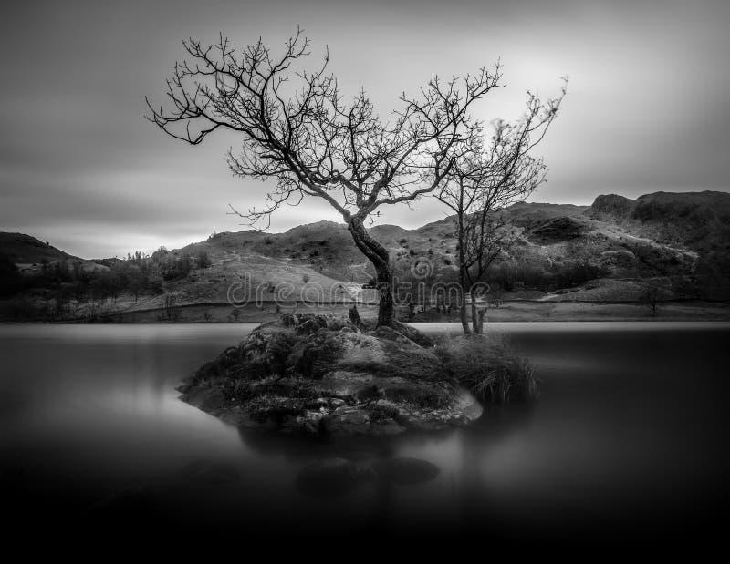 Ensamt träd i svartvitt, Rydal vatten, sjöområde, Cumbri royaltyfri bild
