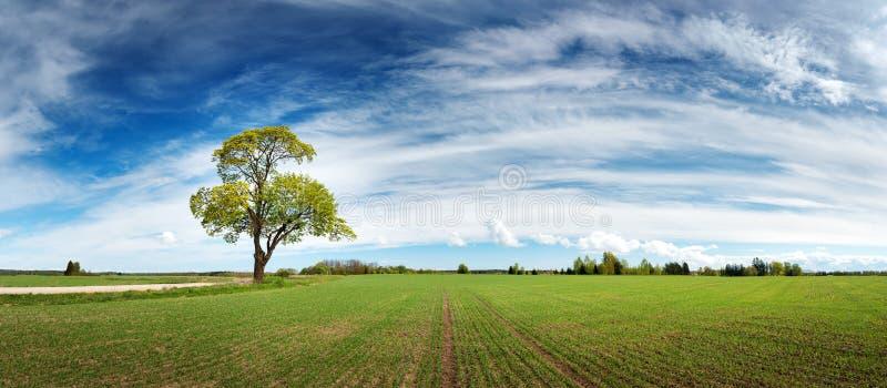 Ensamt träd i vår på paturefält royaltyfria bilder