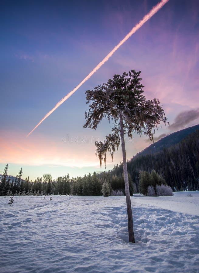 Ensamt träd i vinter på soluppgång royaltyfria foton