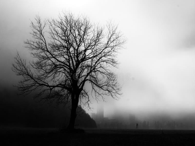 Ensamt träd med backlightning och dimma i svartvitt fotografering för bildbyråer