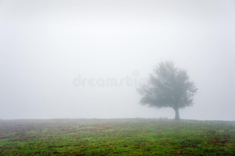 Ensamt träd med dimma arkivfoton