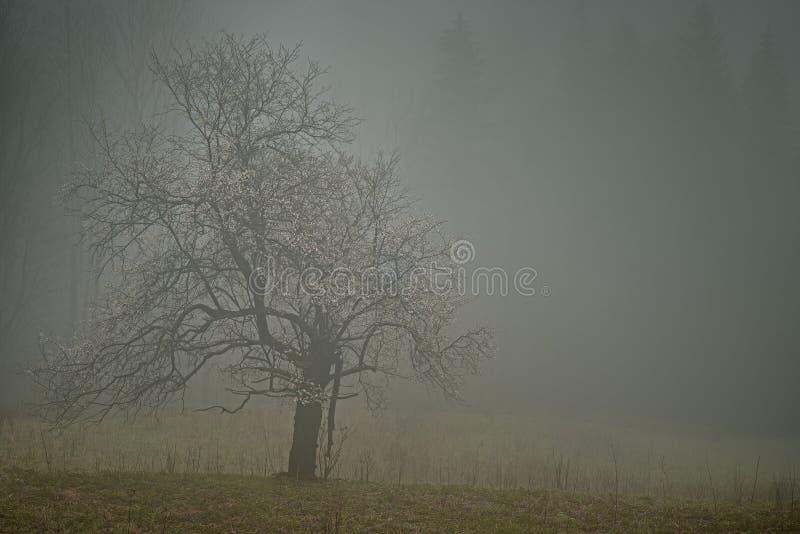 Ensamt träd med dimma royaltyfria foton