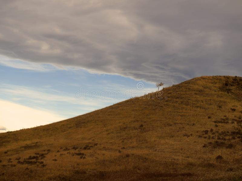 Ensamt träd med stormmoln arkivfoton