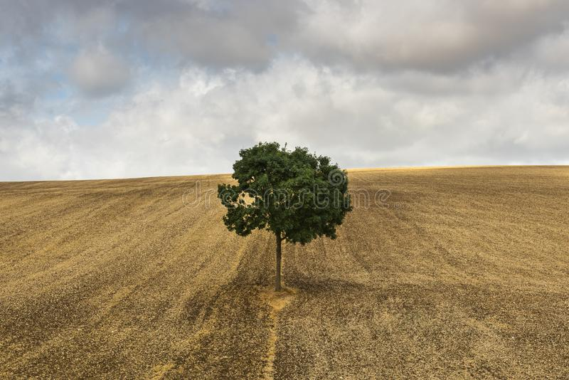 Ensamt träd nära Auxerre Frankrike royaltyfri bild