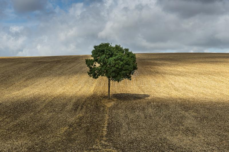 Ensamt träd nära Auxerre Frankrike royaltyfria foton