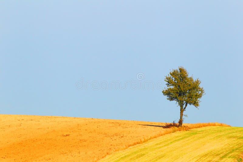 Ensamt träd och bakgrund av himlen fotografering för bildbyråer