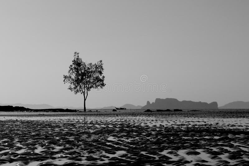 Ensamt träd och barkass royaltyfria foton