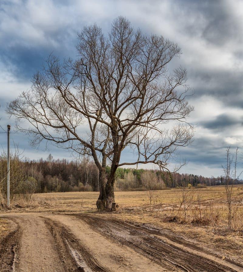 Ensamt träd och väg royaltyfria bilder