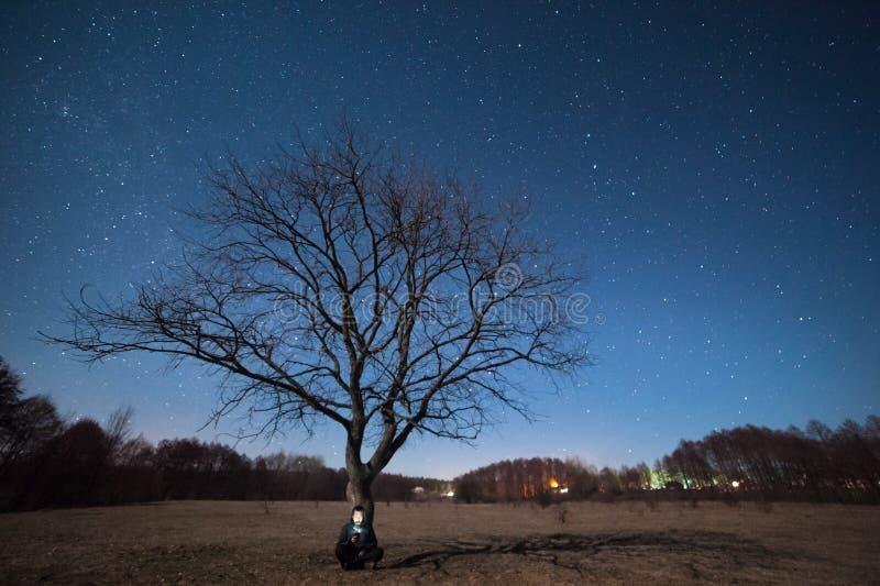 Ensamt träd på äng och stjärnor i himmel royaltyfri fotografi