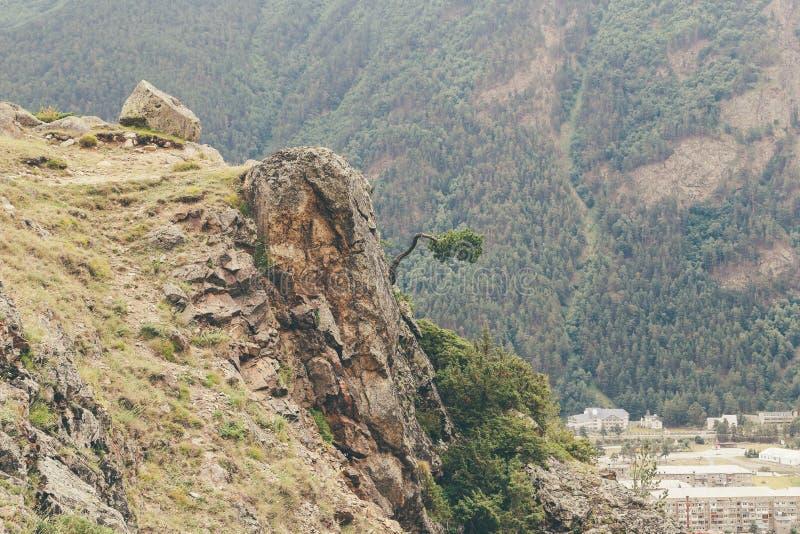 Ensamt träd på de Kaukasus bergen Ryssland royaltyfri foto