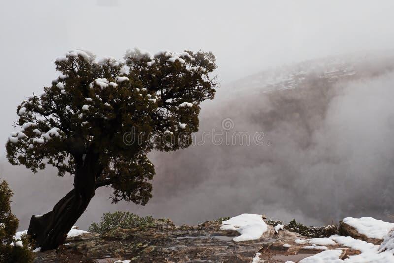 Ensamt träd på den dimmiga kanten royaltyfria bilder