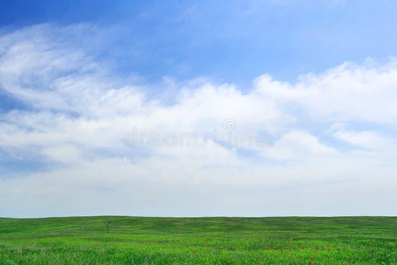 Ensamt träd på den gröna fältbakgrunden royaltyfri fotografi