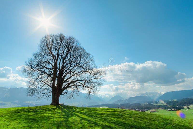 Ensamt träd på den gröna kullen, blå himmel, moln och berg royaltyfria bilder