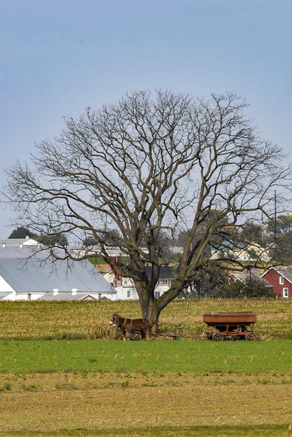 Ensamt träd på en Amish lantgård med lantgårdutrustning och hästar under den royaltyfri foto