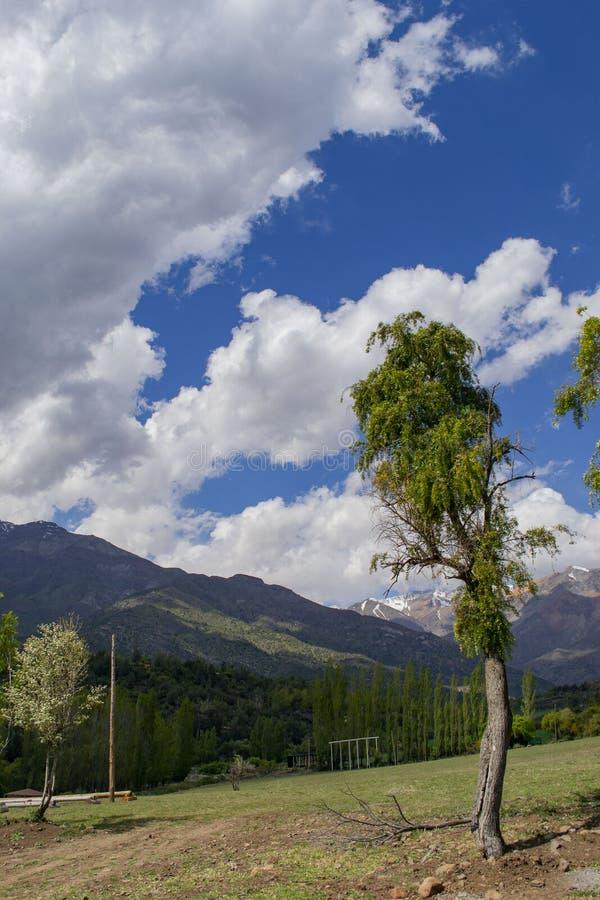 Ensamt träd på en backe som förbiser bergen och molnen royaltyfri bild