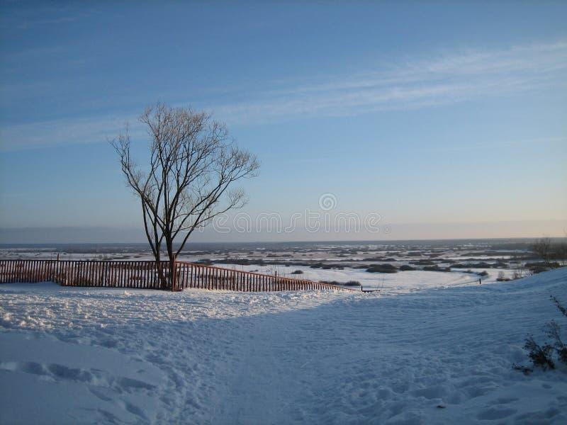 Ensamt träd på en hög löneförhöjning över de vidsträckta vidderna av snö-täckte ängar i vinterdag för solnedgång fotografering för bildbyråer