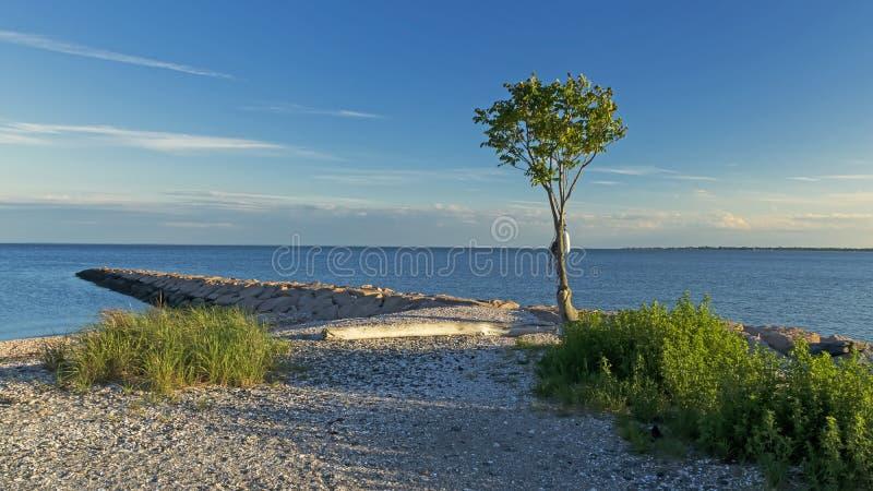 Ensamt träd på en panorama- skyddsmur mot havet arkivfoto