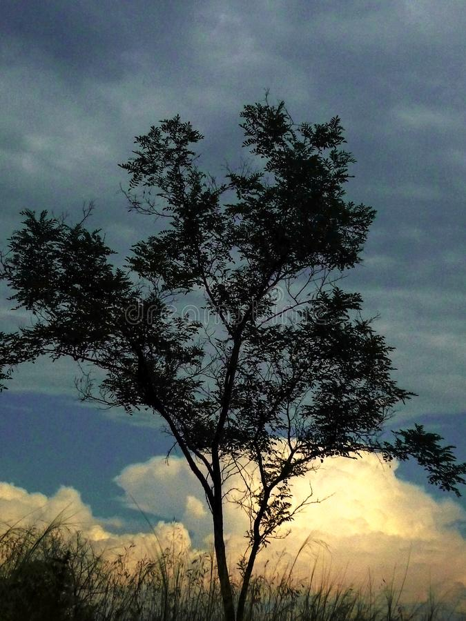 Ensamt träd på en skymningbakgrund arkivfoto