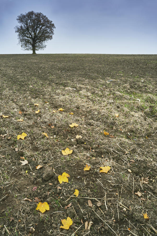 Ensamt träd på ett fält fotografering för bildbyråer